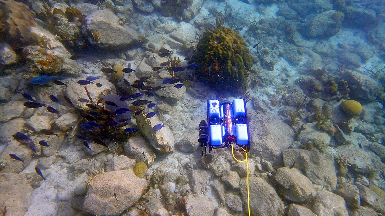 Co-Robotic Scientific Exploration of the Oceans